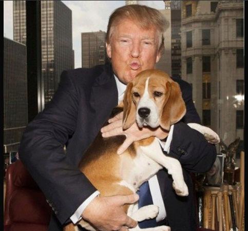 Elezioni USA 2016: Trump o Clinton? - Pagina 14 Immagi10