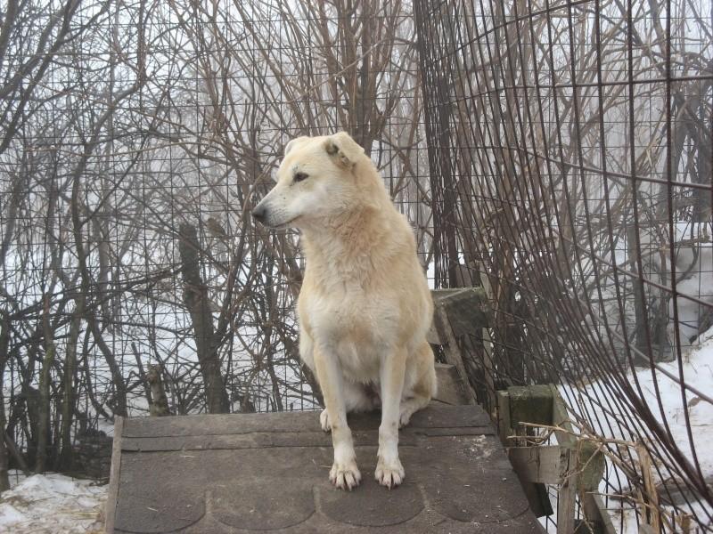 DULCE - Magnifique femelle Blanche - née en 2009 - Parrainée par Samie -SOS-FB-R-SC-  02213