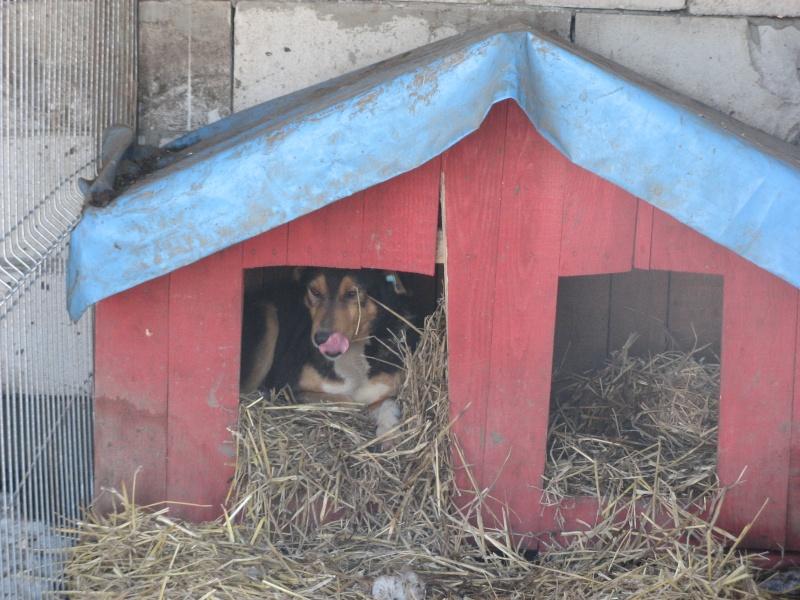 DOUCKY - NE LE 09/01/2012 - RECHERCHE NOUVELLE FAMILLE (visible sur dépt 44 ) sorti de l'équarrissage en déc 2013-SC-SOS- 05211
