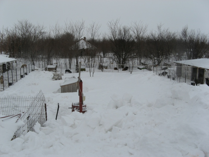 OPERATION RAPATRIEMENT DES CHIENS DE LENUTA NEIGE - JANVIER 2014 Img_1411