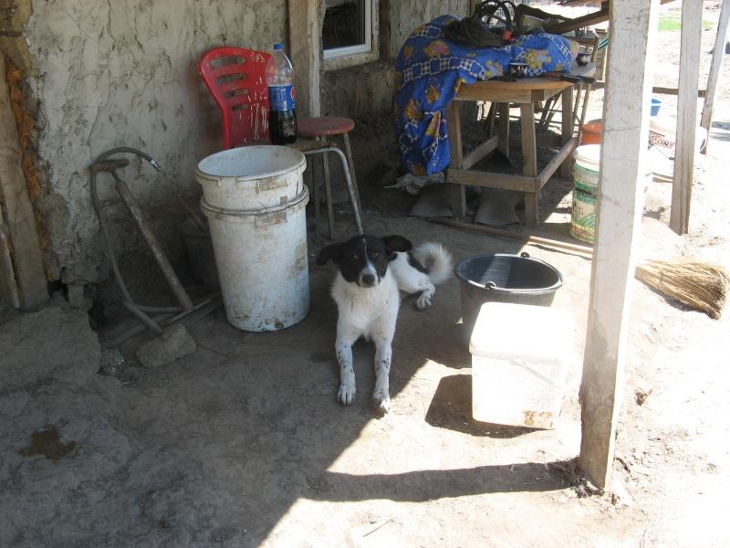 GAYA- femelle noir et blanc née en 2013- parrainée par Skara - SC-SOS-R- Pict1387