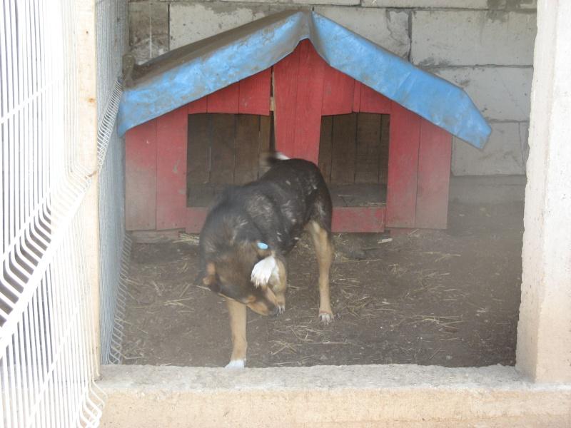 DOUCKY - NE LE 09/01/2012 - RECHERCHE NOUVELLE FAMILLE (visible sur dépt 44 ) sorti de l'équarrissage en déc 2013-SC-SOS- Pict1409