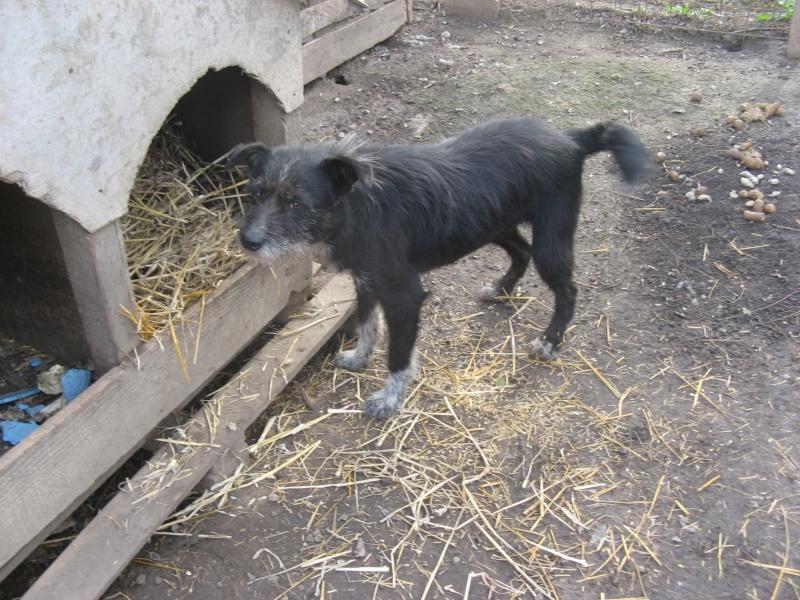 NOYA, née en 2010, En FA dans le 94 - type griffon - Parrainée par Yemtsi-R-SOS-FB-LBC-SC-AS-30MA - Page 2 Pictu212