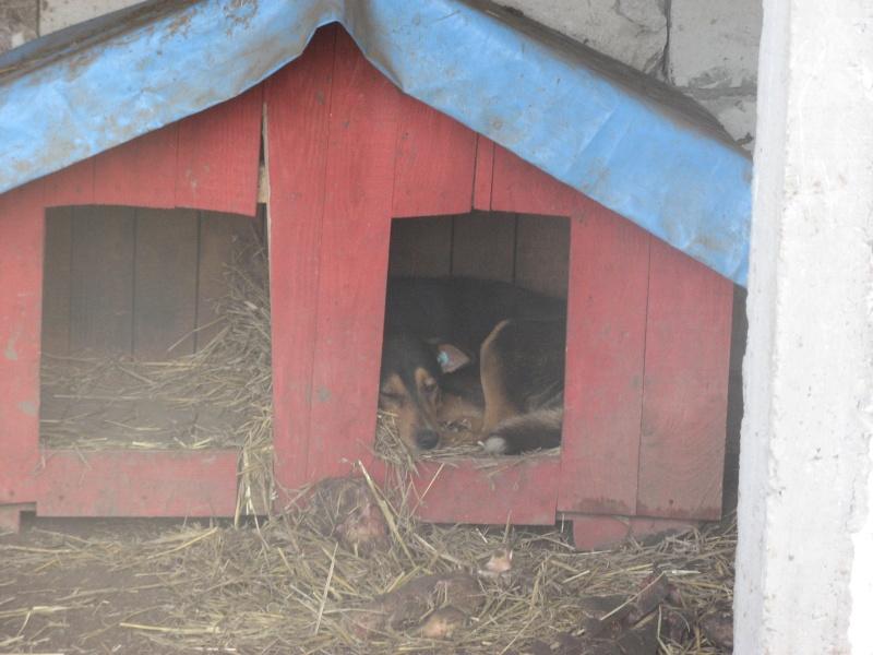 DOUCKY - NE LE 09/01/2012 - RECHERCHE NOUVELLE FAMILLE (visible sur dépt 44 ) sorti de l'équarrissage en déc 2013-SC-SOS- Pictu443