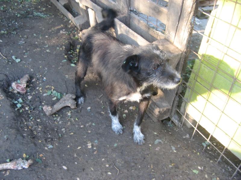 NOYA, née en 2010, En FA dans le 94 - type griffon - Parrainée par Yemtsi-R-SOS-FB-LBC-SC-AS-30MA Pictur10