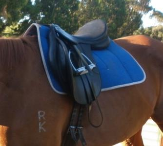 Blue Saddle blanket + 17 1/2 Status GP Saddle 13775010