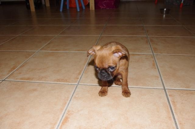 """Photos de vos chiens """"malheureux"""" Imgp3511"""