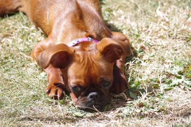 """Photos de vos chiens """"malheureux"""" Imgp4012"""
