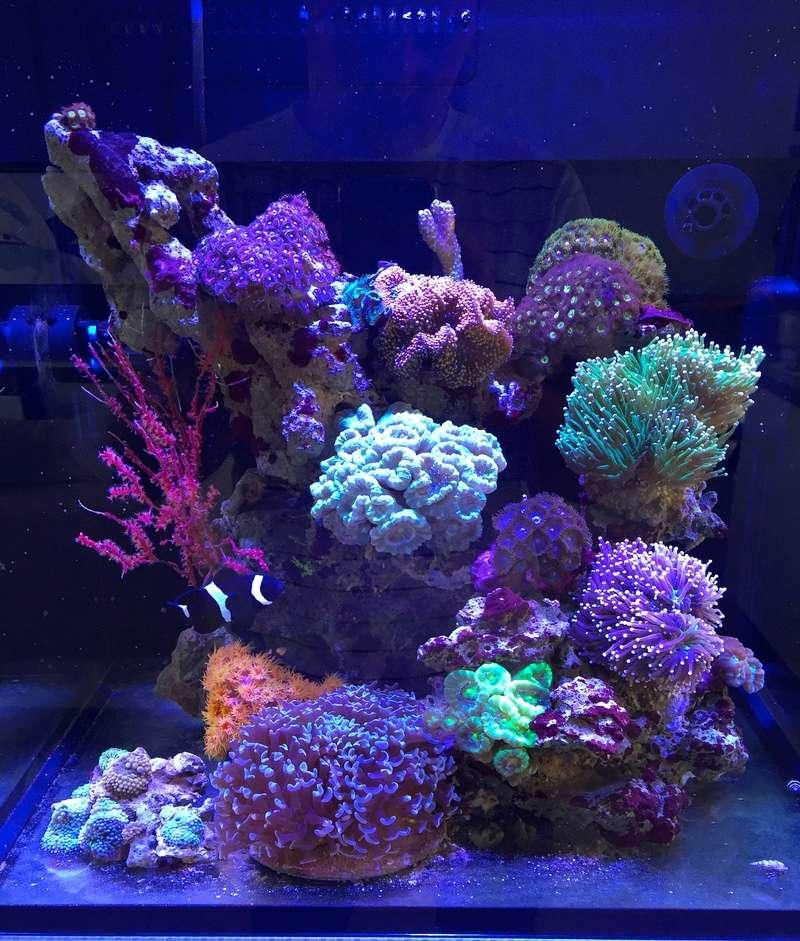 red sea max nano Img_1326