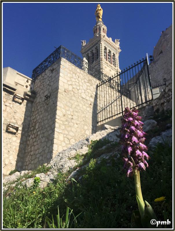 3 escapades en Provence fin février 2017-054