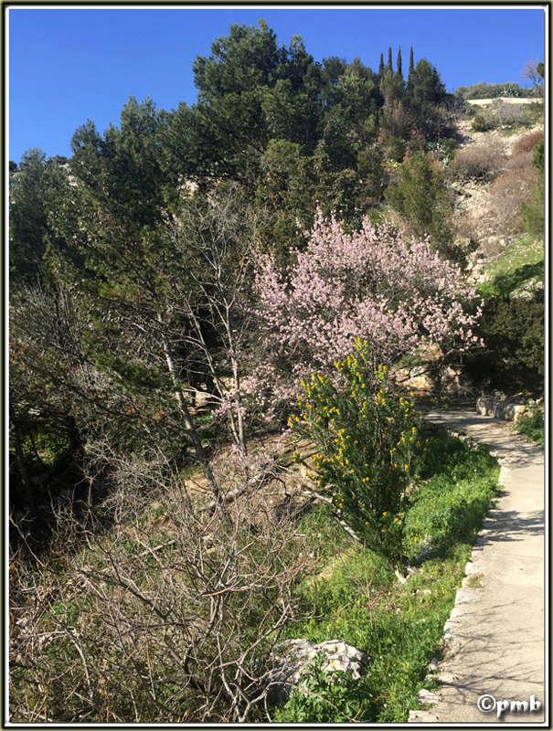 3 escapades en Provence fin février 2017-056