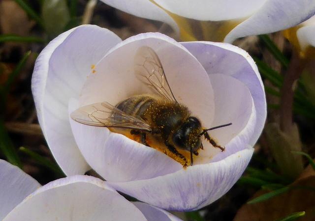 abeilles 16-02-12
