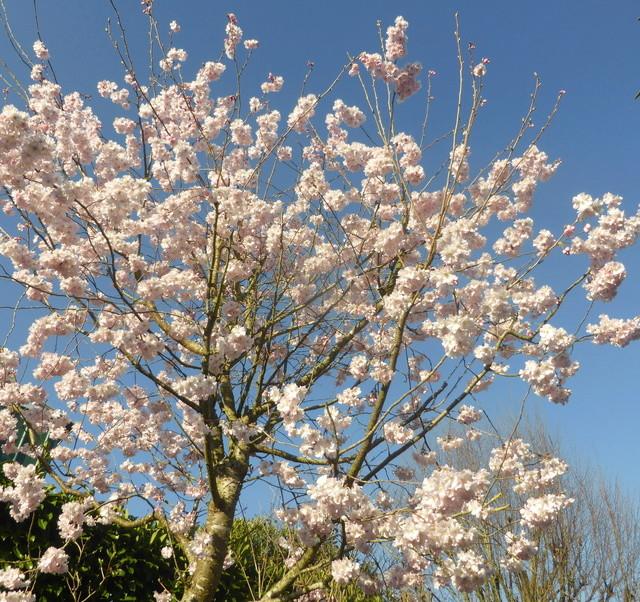 regain fleuri - Page 2 16-03-11