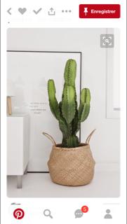 Euphorbia candelabrum ? [identification à confirmer] Johann10