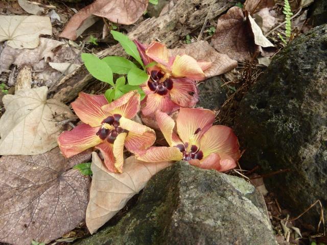 Concours: Les plantes nous en font voir de toutes les couleurs. Participations (photo normale) - Page 2 P1010137