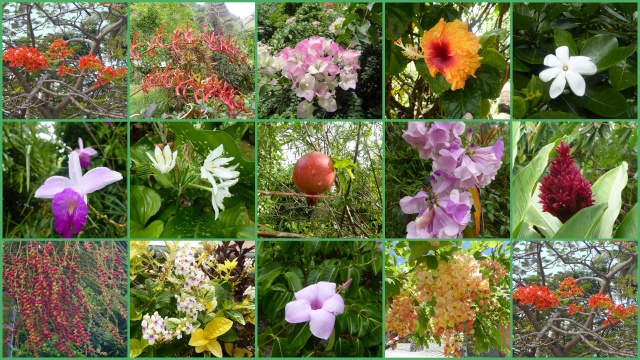 Concours : Les plantes nous en font voir de toutes les couleurs - Page 2 Polyne10