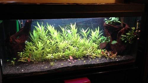Ajout de 2 tube T5 dans aquarium 250 L Uuu11
