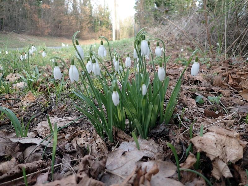 Un apeçu des rosettes en Essonne  P2250011