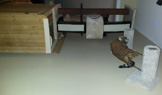 Chat et chien et petit logis Hamac11