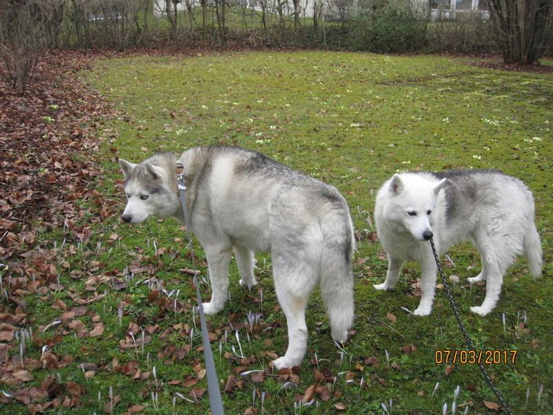 Saskia et Jiro, partie 2 - Page 39 2010