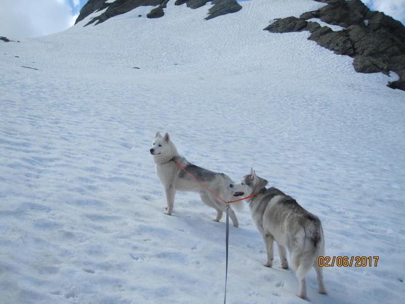 Saskia, Jiro, et leurs copains 525