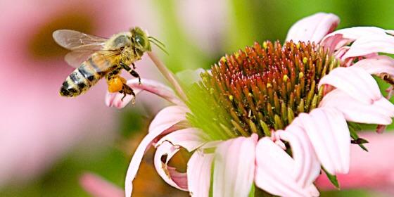 La stratégies d'atterrissage des abeilles! Évolution ou création? Image59