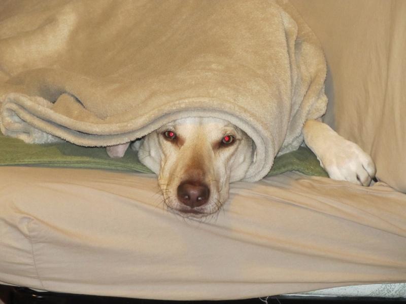 Vos sourires et fou-rires grâce à vos chiens - Page 2 Img_5912