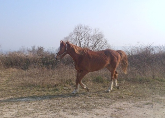 cheval qui pete 14763711
