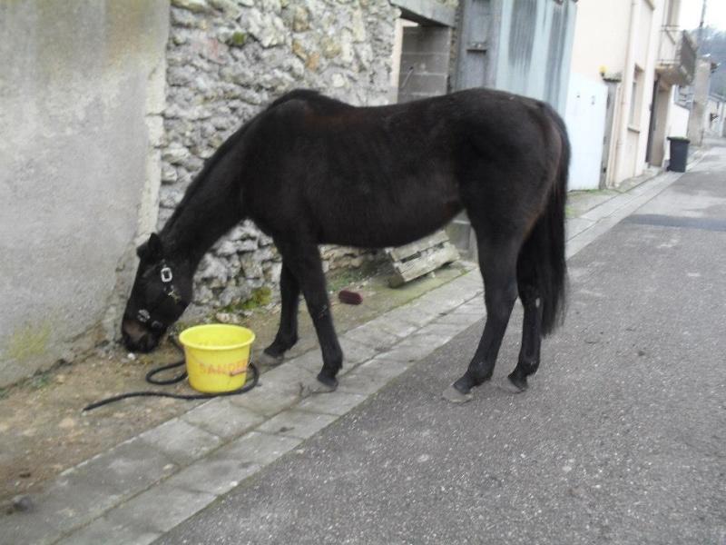 Enregistrement obligatoire des chevaux en Suisse.. 57808410