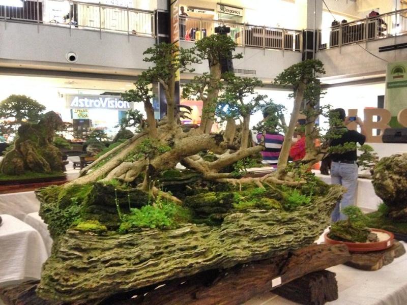 KHBS bonsai 10th show 10144410