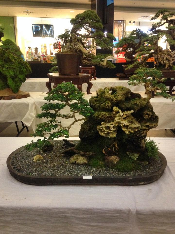 KHBS bonsai 10th show 12346510