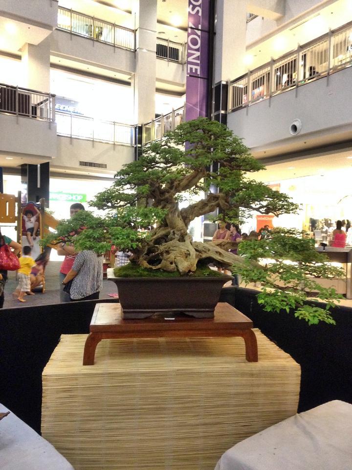 KHBS bonsai 10th show 12347310