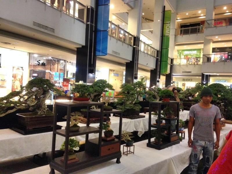 KHBS bonsai 10th show 13742310