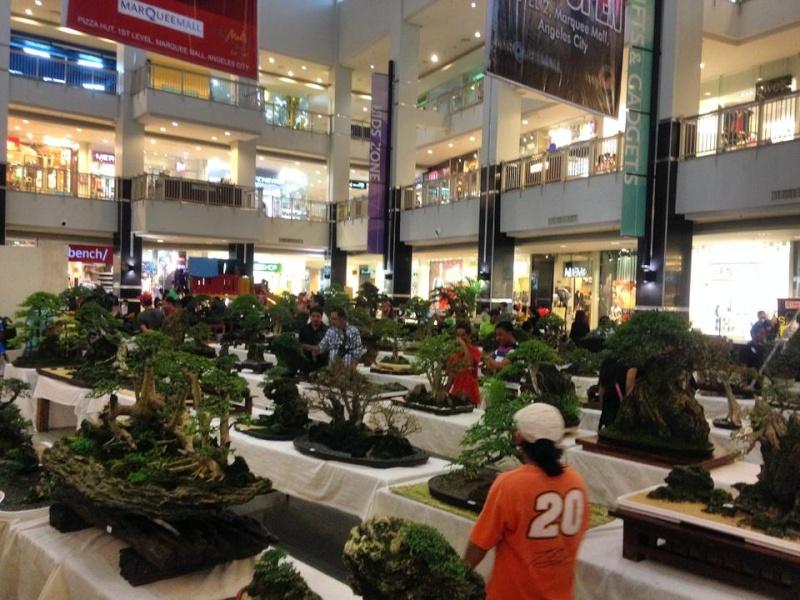 KHBS bonsai 10th show 13743010