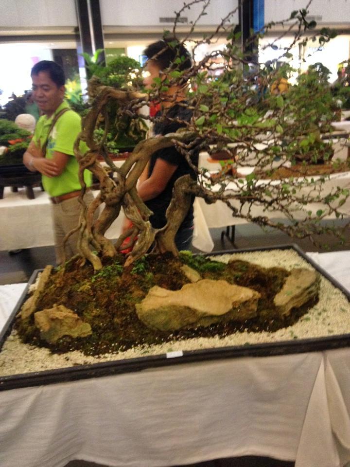 KHBS bonsai 10th show 13756410
