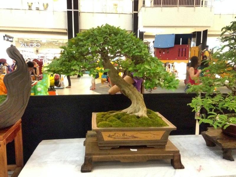 KHBS bonsai 10th show 13770410