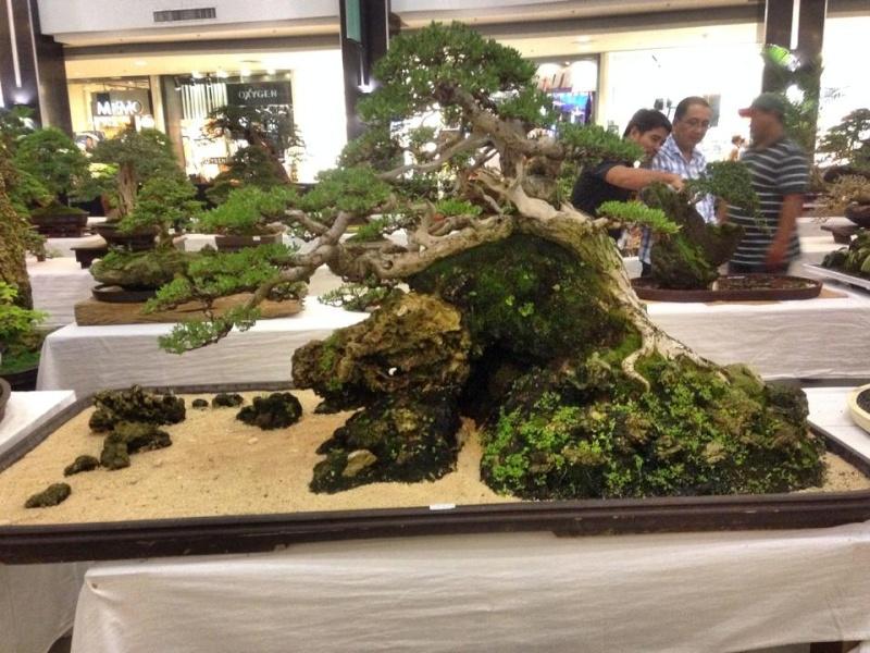 KHBS bonsai 10th show 13770710