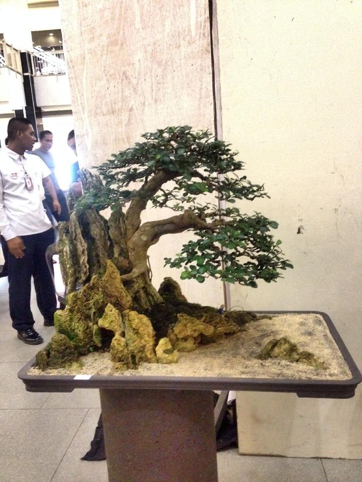 KHBS bonsai 10th show 13773111