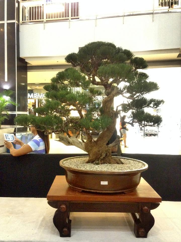 KHBS bonsai 10th show 13781810
