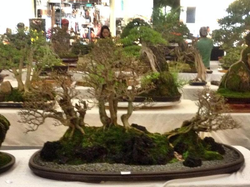 KHBS bonsai 10th show 13785610