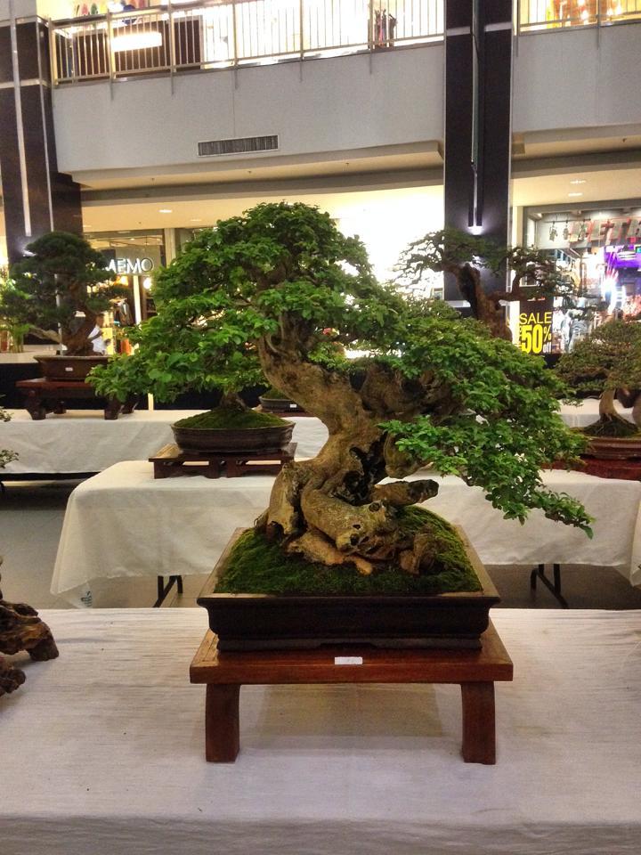 KHBS bonsai 10th show 13807110