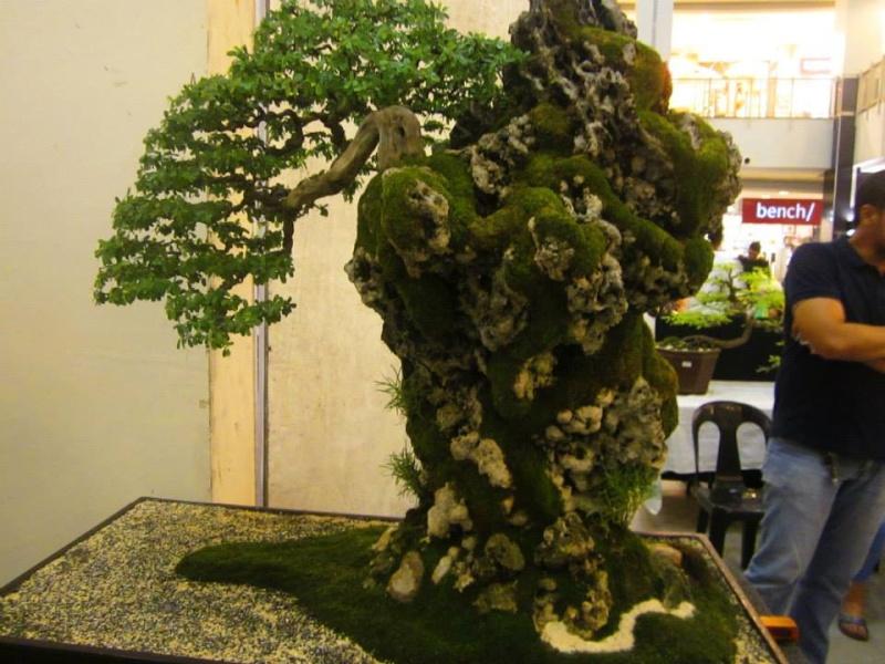 KHBS bonsai 10th show 13829910