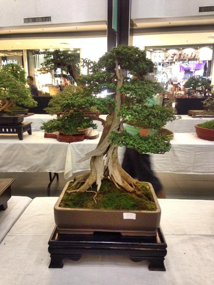 KHBS bonsai 10th show 13832410
