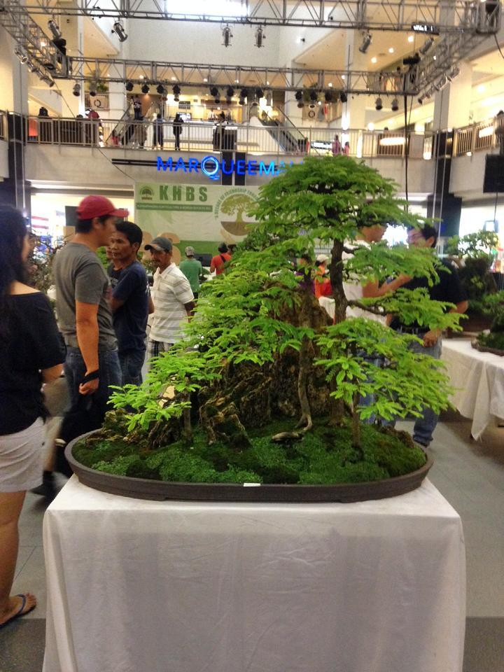 KHBS bonsai 10th show 13855010