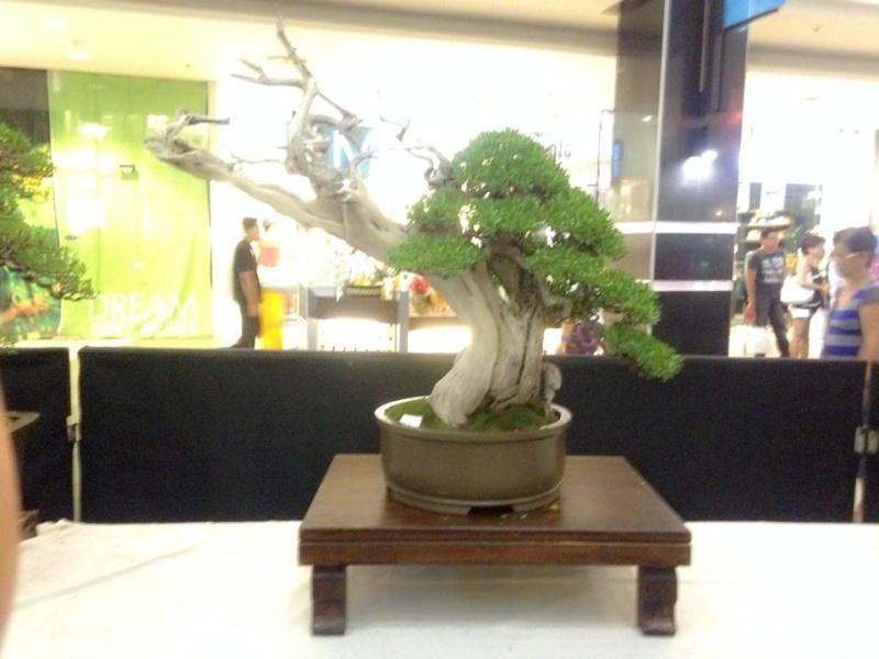KHBS bonsai 10th show 13920410