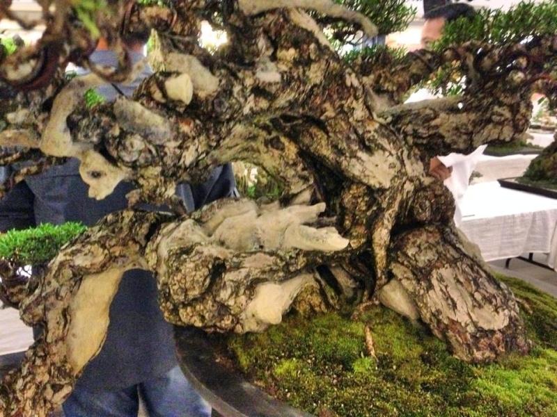 KHBS bonsai 10th show 13939311
