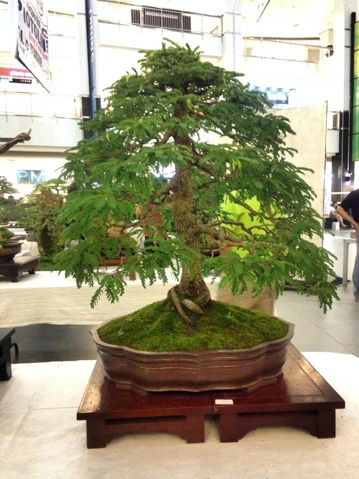 KHBS bonsai 10th show 13947810
