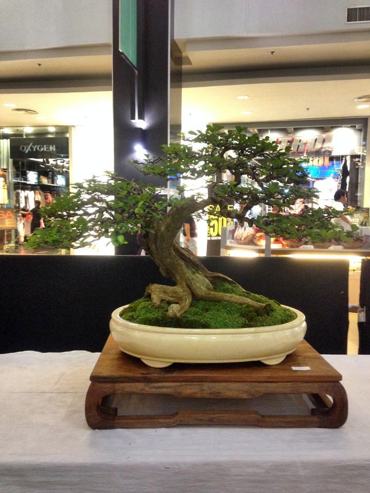 KHBS bonsai 10th show 13958010