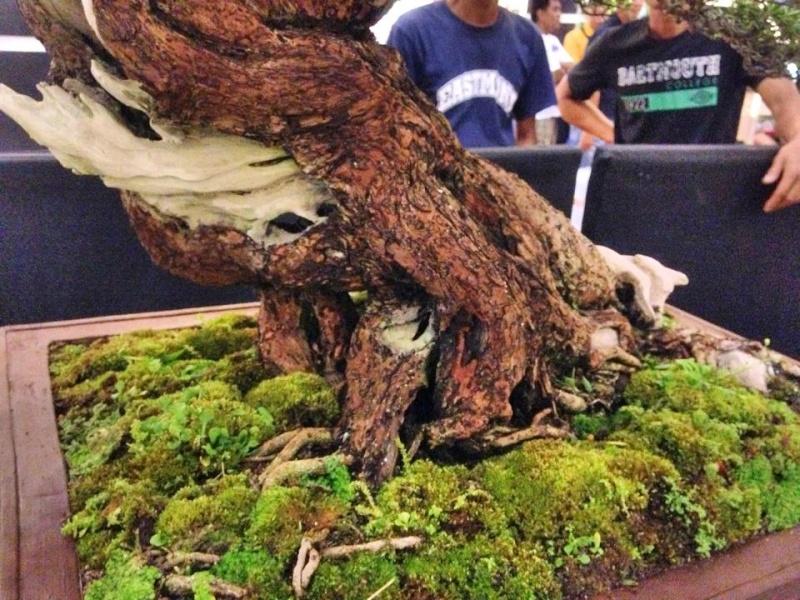 KHBS bonsai 10th show 13958011
