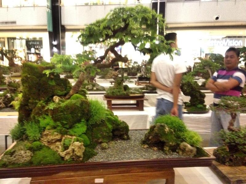 KHBS bonsai 10th show 94641010